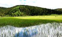 香格里拉普达措公园:原始生态环境美如画