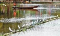 生态环境好 鹭舞大观河