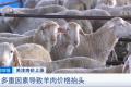 """肉价上涨!""""牛魔王""""""""羊贵妃""""""""猪坚强""""都来了,啥原因?"""